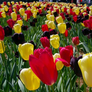 <a href='http://www.ashevillelivecam.com/link/BiltmoreHouse'>Biltmore House</a> Festival of Flowers